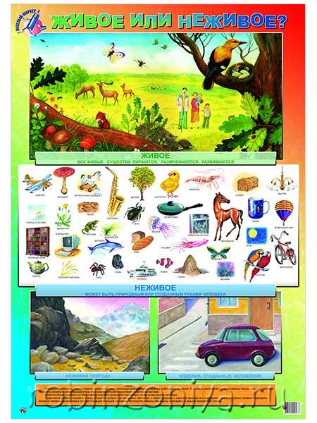 Плакат Живое или неживое купить с доставкой по России в интернет-магазине robinzoniya.ru.
