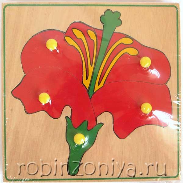 Рамка с вкладышами Комплект ботаника от ЛЭМ купить с доставкой по России в интернет-магазине robinzoniya.ru.
