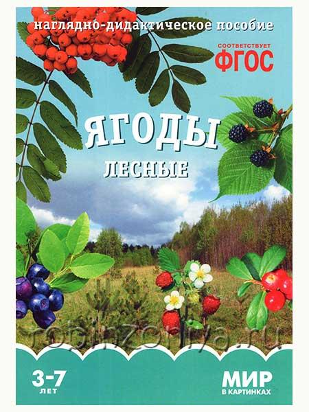 Наглядный материал по ФГОС Ягоды лесные купить в интернет-магазине robinzoniya.ru.