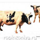 Домашние животные, наглядный материал по ФГОС, А4