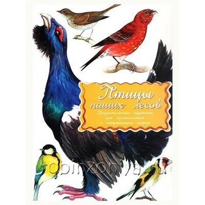 Дидактические обучающие карточки Птицы наших лесов