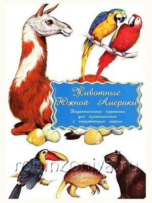 Животные Южной Америки Дидактические карточки