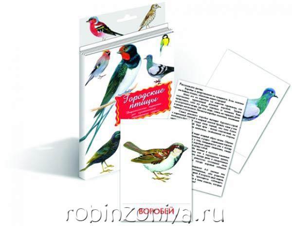Карточки дидактические для детей Городские птицы купить в интернет-магазине robinzoniya.ru.