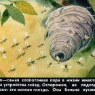 Пленочный диафильм Кто как лето проводит