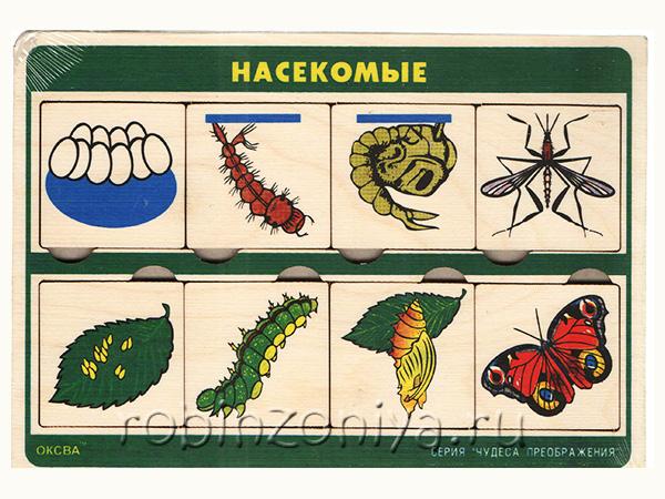 Рамка с вкладышами Чудеса преображений Насекомые купить в интернет-магазине robinzoniya.ru.
