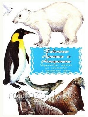 Дидактические карточки Животные Арктики и Антарктики