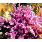 Дидактические карточки Расскажите детям о морских обитателях
