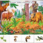 Дидактические карточки по окружающему миру №3 Лужок. Природные сообщества