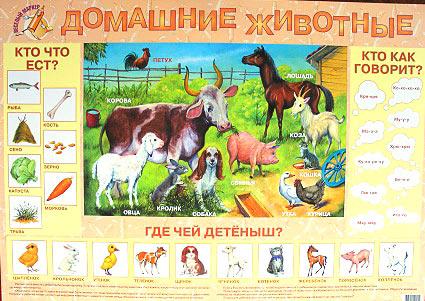 Детский плакат Домашние животные купить в интернет-магазине robinzoniya.ru.