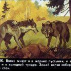 Пленочный диафильм Звери наших лесов