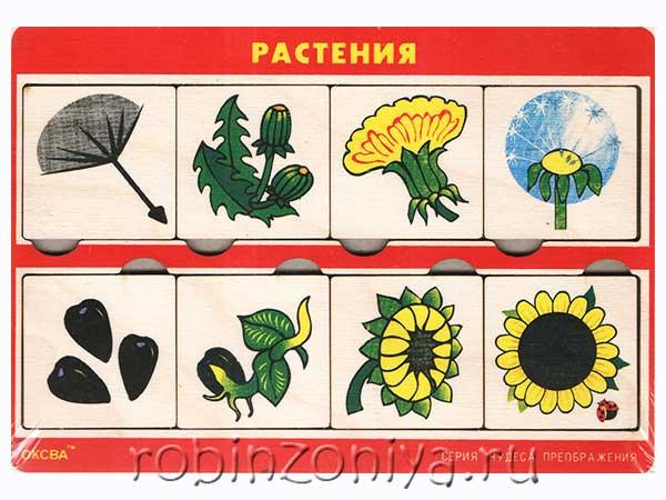 Рамка с вкладышами Чудеса преображений Растения купить в интернет-магазине robinzoniya.ru.