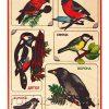 Рамка с вкладышами Зимующие птицы