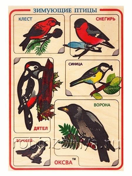 Рамка вкладыш Зимующие птицы для обучения по Монтессори купить в интернет-магазине robinzoniya.ru.