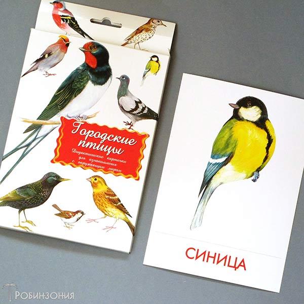 карточки Городские птицы