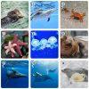 Игра Мими Мемо Морские животные